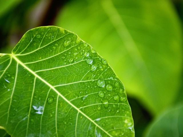 ACV y otros conceptos de sostenibilidad: aclarando la confusión